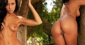 bailey-posing-under-a-tree