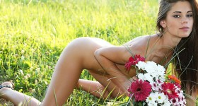 perky-caprice-in-a-field